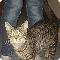 Adopt A Pet :: Joel - Kenai, AK