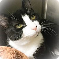 Adopt A Pet :: Porter - Webster, MA