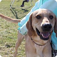 Adopt A Pet :: Hunter - Dayton, OH