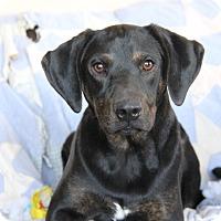 Adopt A Pet :: Skeeter - Pittsboro, NC