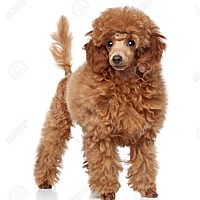 Adopt A Pet :: Buddy - Mt. Laurel, NJ