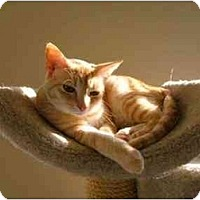 Adopt A Pet :: Cassie and Ellie - Columbia, SC