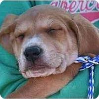 Adopt A Pet :: Bailey - Cumming, GA