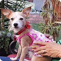 Adopt A Pet :: Ethel - Encinitas, CA