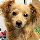 Adopt A Pet :: DELIA (video)