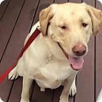 Adopt A Pet :: Oakley - Acushnet, MA