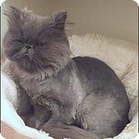Adopt A Pet :: Pat - Gilbert, AZ