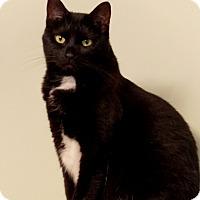 Adopt A Pet :: Olive - Somerset, KY