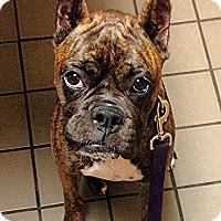 Adopt A Pet :: Tulsa - Sunderland, MA