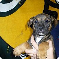 Adopt A Pet :: Bear - Oviedo, FL