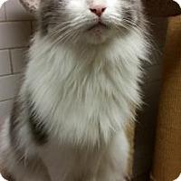 Adopt A Pet :: Gwen - New York, NY