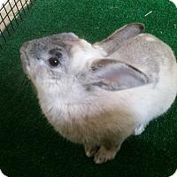 Adopt A Pet :: Thumper - Chula Vista, CA