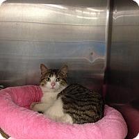 Adopt A Pet :: Kikki - Washington, PA