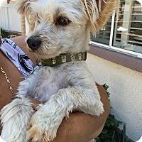 Adopt A Pet :: Sebastian - Sherman Oaks, CA