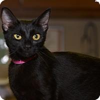 Adopt A Pet :: Jubilee - Medina, OH