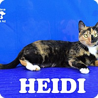 Adopt A Pet :: Heidi - Carencro, LA