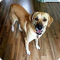 Adopt A Pet :: Madee - Austin, TX