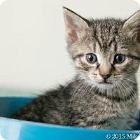 Adopt A Pet :: Castor - Philadelphia, PA