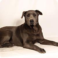 Adopt A Pet :: Zelda Sharp - St. Louis, MO