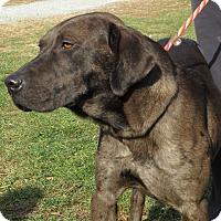 Adopt A Pet :: Tye - Unionville, PA