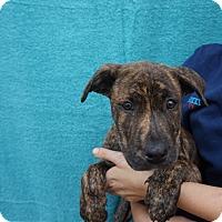 Adopt A Pet :: April - Oviedo, FL