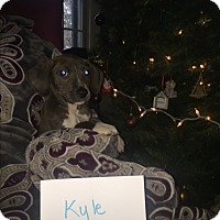 Adopt A Pet :: Kyle - Colonial Heights, VA