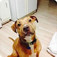 Adopt A Pet :: Brody - Orlando, FL
