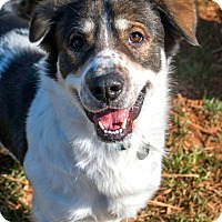 Adopt A Pet :: R2 - Knoxville, TN