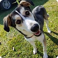 Adopt A Pet :: Hope K92-9572 - Thibodaux, LA