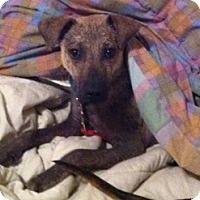 Adopt A Pet :: TexMex - Dripping Springs, TX
