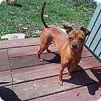 Adopt A Pet :: Precious - Downers Grove, IL