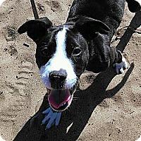 Adopt A Pet :: Nellie - San Francisco, CA