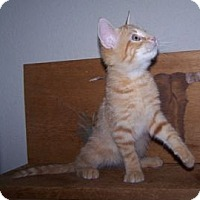 Adopt A Pet :: K-Lillian9-Garhett - Colorado Springs, CO
