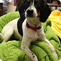 Adopt A Pet :: Snoopy - Homewood, AL