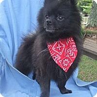 Adopt A Pet :: Ike - Mooy, AL
