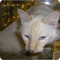 Adopt A Pet :: Omar - Strathmore, AB