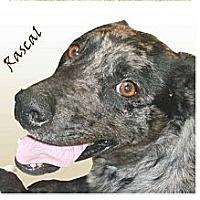 Adopt A Pet :: Rascal - Conway, AR