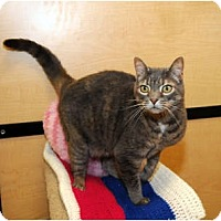 Adopt A Pet :: Kennedy - Farmingdale, NY