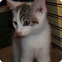 Adopt A Pet :: LuLu - Acme, PA