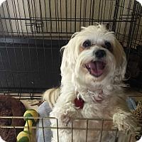 Adopt A Pet :: Oliver - San Dimas, CA