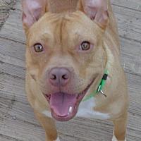 Adopt A Pet :: Bosley - Loganville, GA