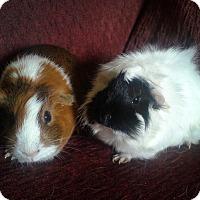 Adopt A Pet :: Ginny & Carla - San Antonio, TX