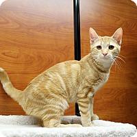 Adopt A Pet :: Coral - Greensboro, GA