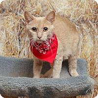 Adopt A Pet :: Olive - Chippewa Falls, WI