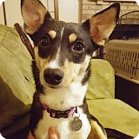 Adopt A Pet :: Aggie - Homewood, AL