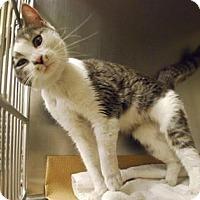 Adopt A Pet :: Liesl - New York, NY