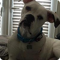 Adopt A Pet :: Maisey - Lincoln, CA