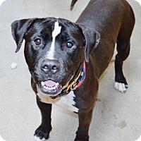 Adopt A Pet :: Mike - San Jacinto, CA