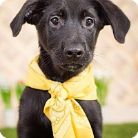 Adopt A Pet :: Jay - New York, NY