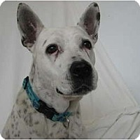 Adopt A Pet :: Abby - Fort Lauderdale, FL